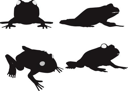 vector illustration of frog on white background Illustration