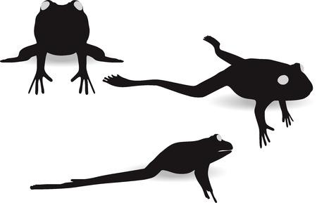 anuran: vector illustration of frog on white background Illustration
