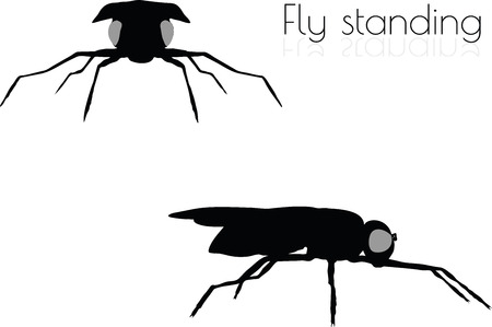 vector illustration of fly on white background