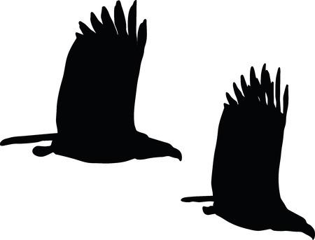 vector illustration of eagle on white background