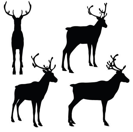 EPS 10 vector illustratie van Rendier op witte achtergrond