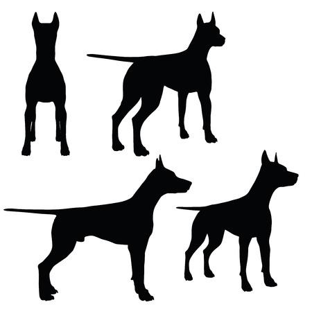 EPS 10 vector illustration of dog on white background