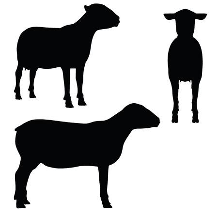 EPS 10 vector illustration of Sheep on white background Illustration