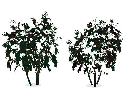 distinct: EPS 10 vector illustration of tree, plant silhouette