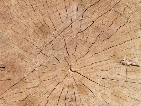 veining: Close up of a wood slice Stock Photo
