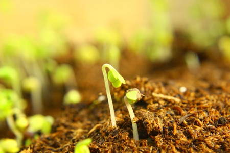 Green seedlings in new life concept. photo