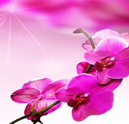 Beautiful pink orchid flowers , greetings card, Stock Photo. photo