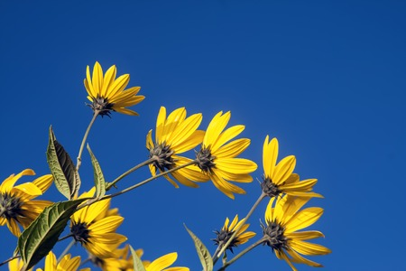 Spring background with beautiful yellow flowers photo