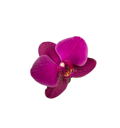 Blooming Twig Of White Purple Orchid Isolated On White Background. Stok Fotoğraf
