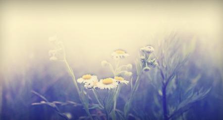 Nature Floral Background In Vintage Style Zdjęcie Seryjne - 44767900