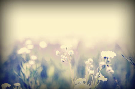 Nature Floral Background In Vintage Style