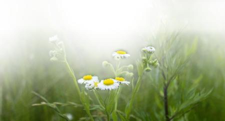 Nature Floral Background In Vintage Style Zdjęcie Seryjne - 44767941