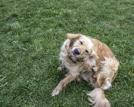 retriever dog portrait outdoors at the Park