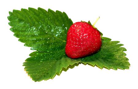 Fresh strawberries on summer , strawberries,seasonal fruits on spring,red fruit Zdjęcie Seryjne