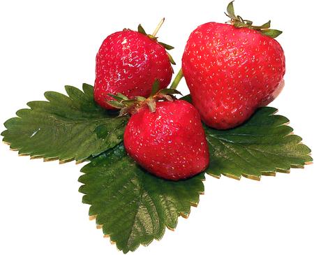 Fresh strawberries on summer , strawberries,seasonal fruits on spring,red fruit Zdjęcie Seryjne - 67205547