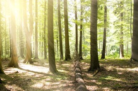 beautiful forest landscape in the morning Zdjęcie Seryjne - 107730543