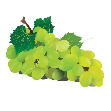 green grape fruit vector
