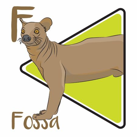 F for fossa. A fossa is a weird animal from Madagascar, it looks like a fusion between dog and cat