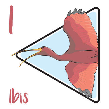 I for Ibis, long-legged wading birds that inhabit wetlands, forests, and plains. They are monogamous and highly territorial while nesting and feeding.