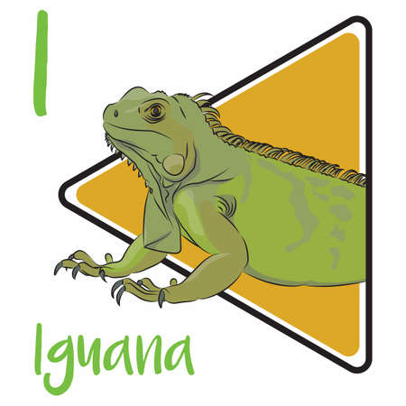 I for Iguana, herbivorous lizards that are native to tropical areas of Mexico, Central America, South America, and the Caribbean. Vecteurs