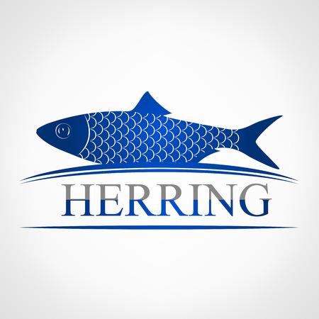 mackerel: Herring