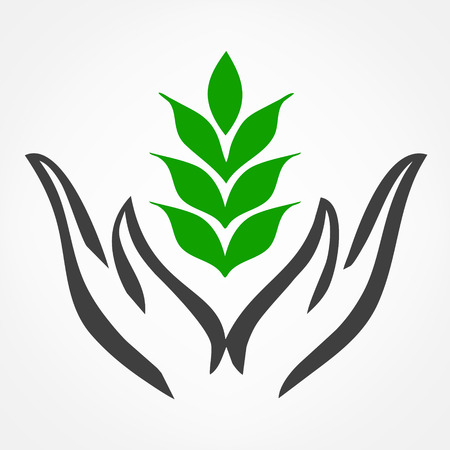 mani e simbolo di grano