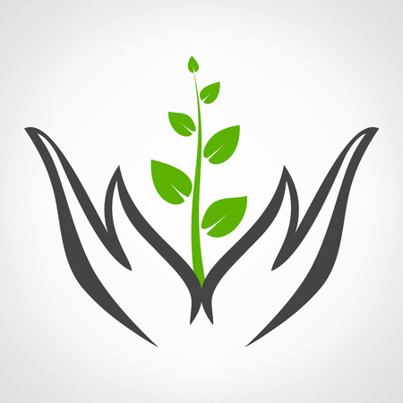hands holding plant: hands holding plant vector Illustration
