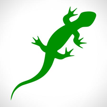 coldblooded: Lizard vector