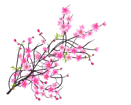 Watercolor sakura frame. Background with blossom cherry tree branches. Hand drawn japanese flowers background Illustration