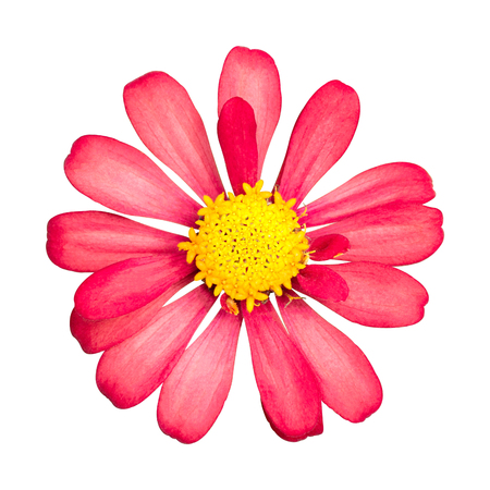 Red flower isolated on white background. Beautiful blossom with yellow pollen. ( Clipping path ) Stock fotó