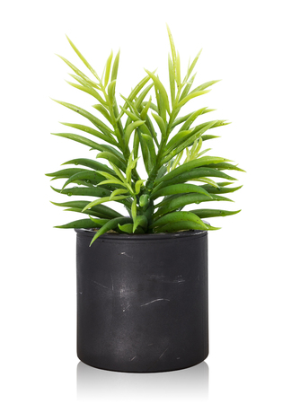 Tree pot isolated on white background. Houseplant for decorations. ( Clipping paths )
