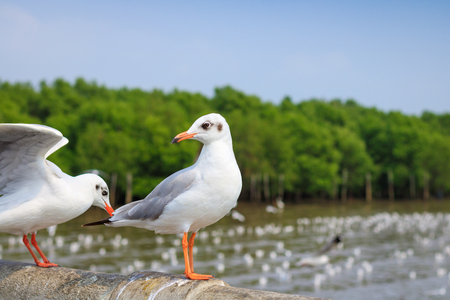 White seagull standing on the bridge in nature background.