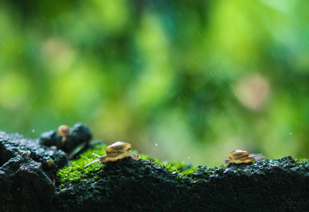 Beautiful nature background and environment. Snails crawl in nature amid heavy rain. Fight with all the problems that come through concept.