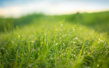 Prachtige natuur achtergrond. Verse grasscène en dauw in de ochtendtijd.
