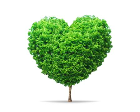 Green leaf tree in heart shape with nature isolated on pure white background. Environment tree for decoration creative concept.