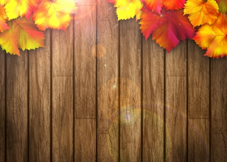 Nature autumn sale design background with space Stock Photo - 21406700