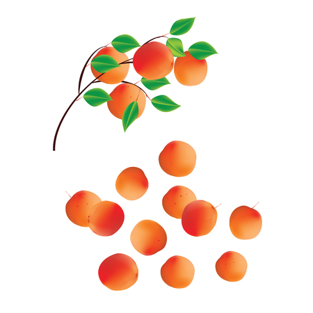 Apricots on a branch with leaves and a scattering abstract art isolated on white background set of design elements for juice yogurt jam Vektorové ilustrace