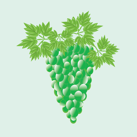 potherb: bunch of green grapes with  leaves isolated abstract art illustration white