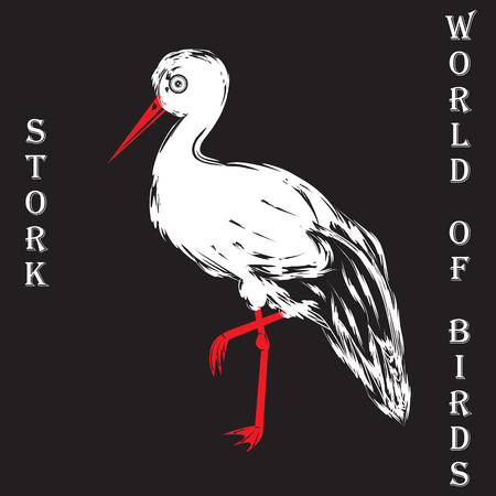 annotation: Stork bird white with black feathers red beak inscription World of birds on a black background