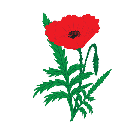 long stem: red poppy and bud on a long green stem with leaves on a white background greeting card invitation wedding birthday Valentines Day Mothers Day Veterans Day
