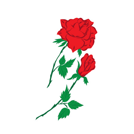 long stem: red rose and bud on a long green stem with leaves on a white background  greeting cards invitations of the wedding  birthday  Valentines Day  Mothers Day