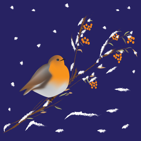 mountain ash: bullfinch bird on a branch of a mountain ash covered with snow winter background