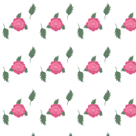 naturally: peony pink flowers white background