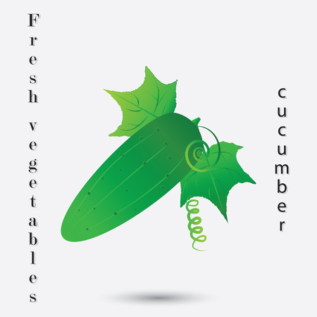 abstract art vegetables: cucumber with leaves isolated on white background fresh vegetables inscription art abstract creative modern vector