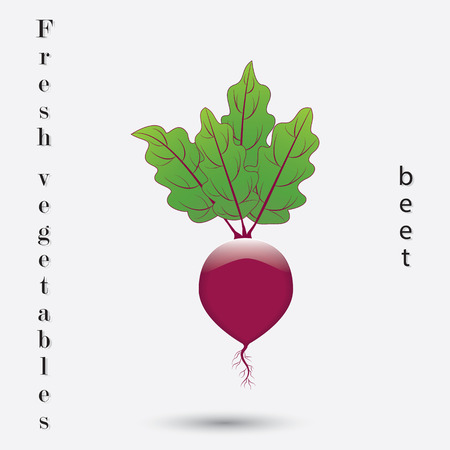 abstract art vegetables: beets with tops isolated on a white background fresh vegetables inscription art abstract creative modern vector