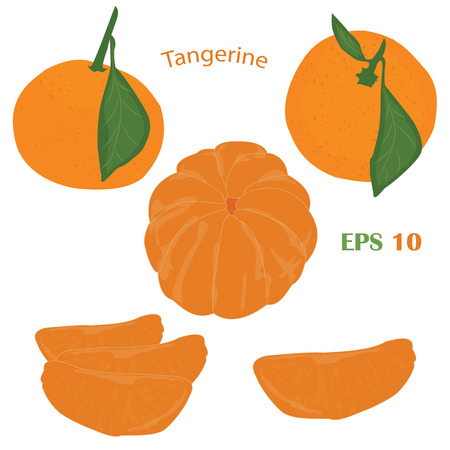 purified: set of tangerines with leaves and purified with slices isolated on white background vector creative modern art