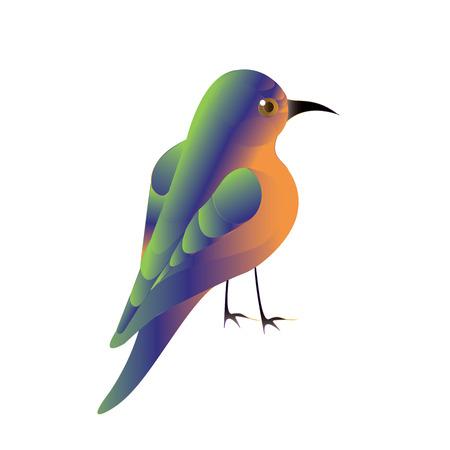 Colibrí meropidae colibri brillante colibrí aislado en un fondo blanco Art elemento creativo vector moderna para diseño