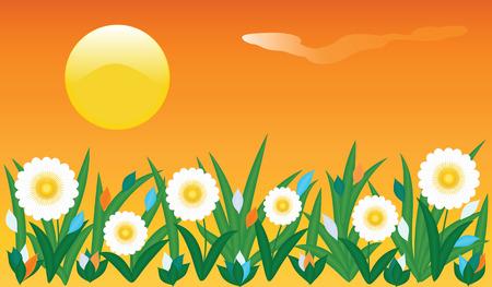 Banner field flowers grass daisy bright sun summer heat orange sky art abstract creative vector illustrations Illustration