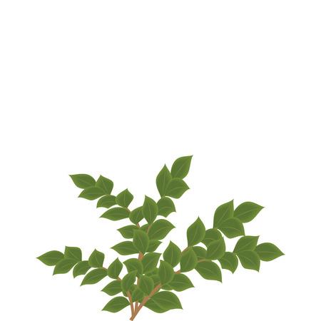 Branches d'arbres verts isolés sur fond blanc art abstrait créatif vecteur moderne Banque d'images - 79882943