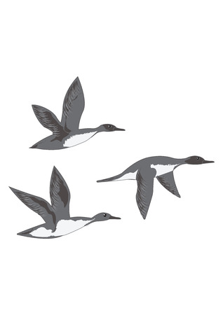 Flying ducks isolated on white background art creative modern vector illustration Hunting logo